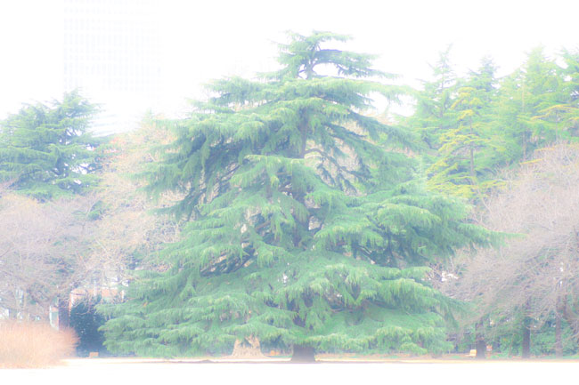 20050224-IMG_4742.jpg
